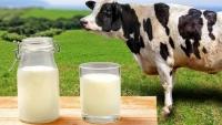 В правительстве опровергли сообщения о возможном росте цен на молоко