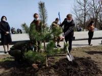 За три недели акции «Сад памяти» высажено 2 миллиона новых деревьев