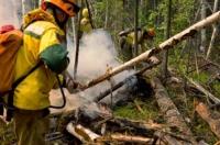 За неделю в России потушили более 600 лесных пожаров