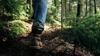 Правила использования гаджетов в лесу напомнили жителям Подмосковья